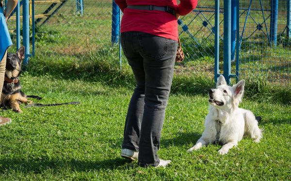 Junghunde Erziehung 1