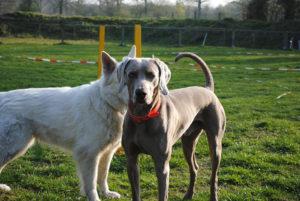 Halbstark Revuerhunde 300x201 - Hundekurs für Halbstarke