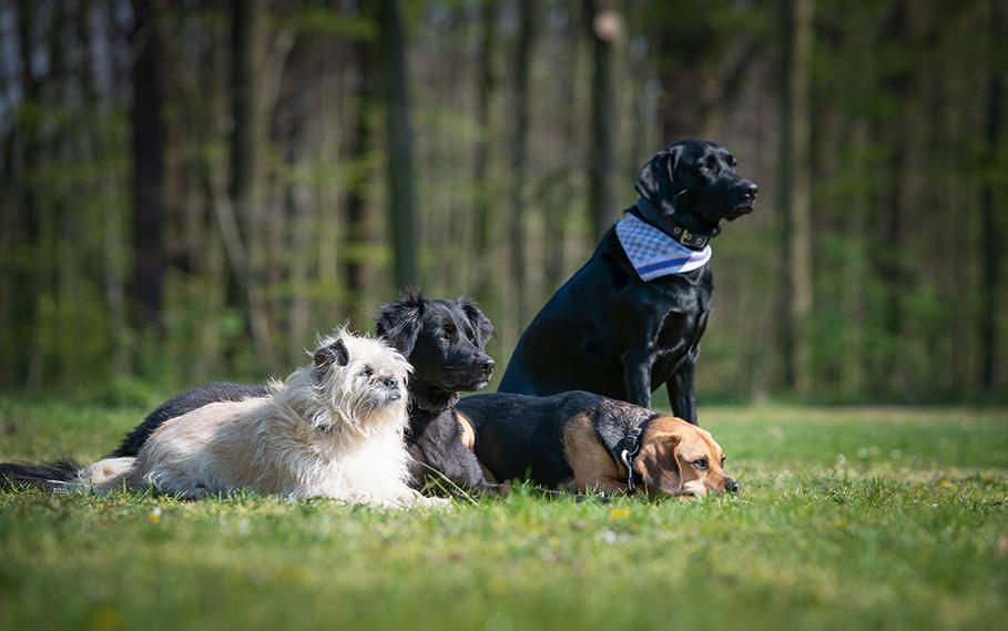 Knigges Revier Revuerhunde - Startseite