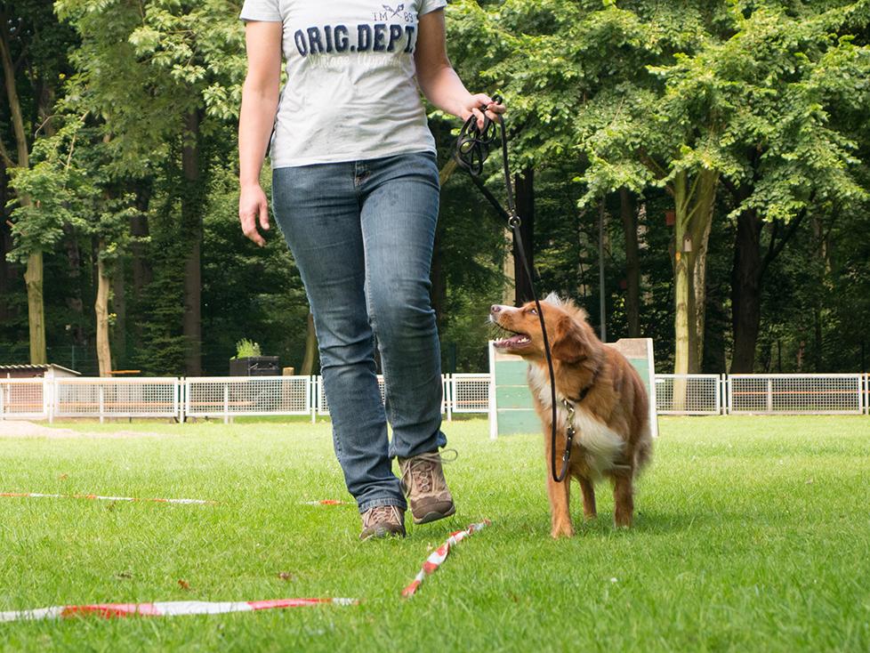 Longieren Revuerhunde - Startseite