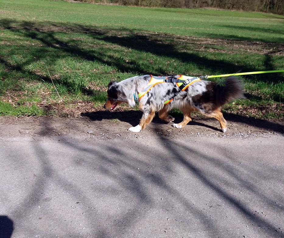 MantrailingRevuerhunde 1 - Startseite