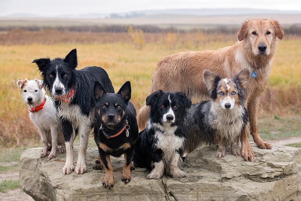 Hundespaziergänge - Startseite